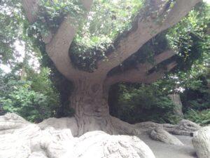Terra Botanica symphonie du chêne