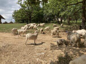 visite chèvres agora
